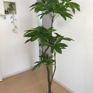 パキラ  造花  180センチ  観葉植物