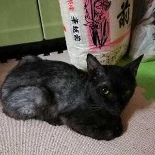黒にちょっと灰色が混ざった♂猫です。