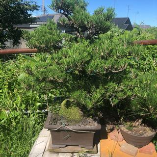 盆栽セット