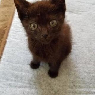 生後1ヶ月くらい 黒猫♂ 黒豆助
