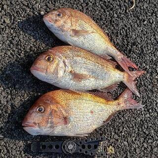 釣りグルチャ募集‼