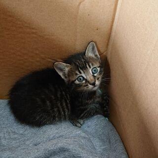 子猫ちゃんの里親さんを探してます。