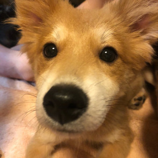 子犬を家族として迎えて下さる方を探しています。
