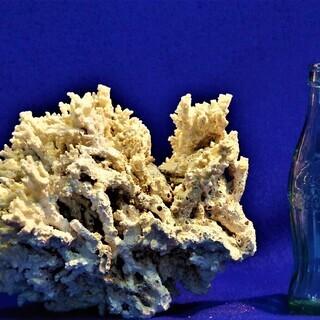 2.1kg珊瑚標本 白化サンゴ コーラル