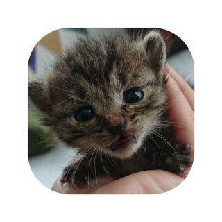 保護トラ子猫ちゃん 里親さん募集です!