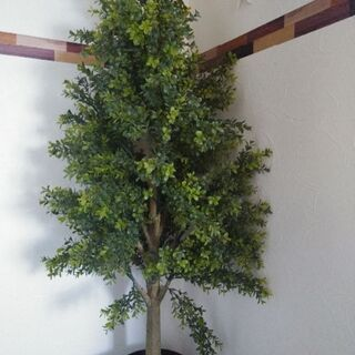 IKEA☆観葉植物