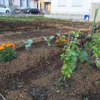 【貸し菜園 利用者募集 】ガーデンファーム