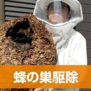 蜂の巣駆除 どこよりも安く!