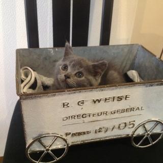 血統書付きの、可愛い😍子猫ちゃん、お店におります