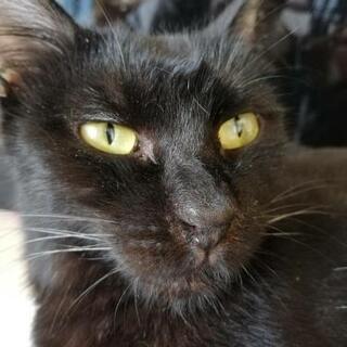 黒猫♀ききです。