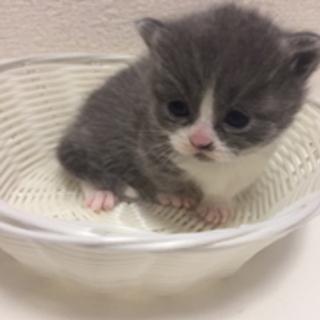 子猫のお店 そるぐりーん★子猫情報★