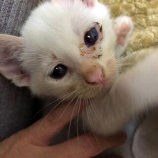 【里親募集】一ヶ月くらいの子猫ちゃん