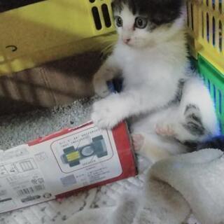 トライアル中です。2ヶ月の子猫ちゃ...
