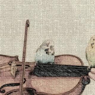 兵庫・大阪でバイオリン教えています