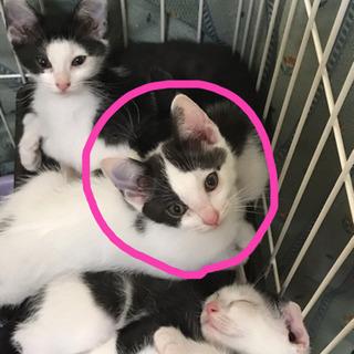 【里親募集】生後2ヶ月の仔猫3匹
