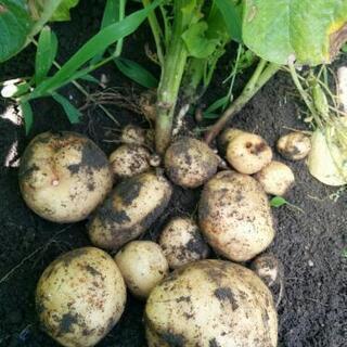 野菜栽培士が育てた無農薬有機栽培 野菜