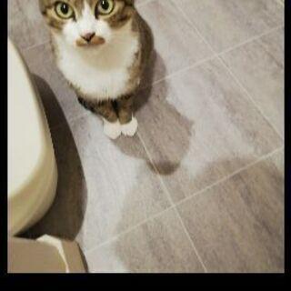 とても可愛い親子猫です