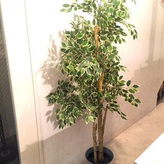 【売約済み🙏】【超美品】IKEA 大型観葉植物(イミテーション)...