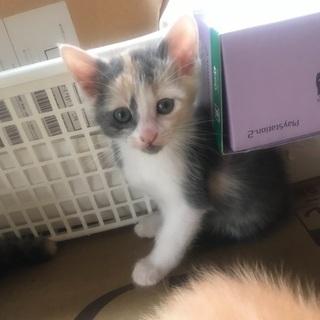 野良猫が産んだ仔猫(2ヶ月)→黒茶色