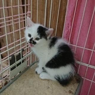 とても愛らしい甘えたな赤ちゃん猫!