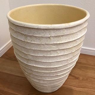 観葉植物の鉢(屋内)