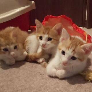 甘ったれな3兄弟~生後1ヶ月くらい