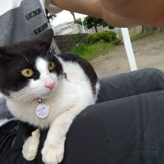 保護猫の①一時預かり先 and ②里親を大募集!