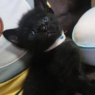 生後約1ヶ月の黒猫さんฅ•ω•ฅ