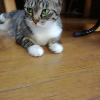 🐱【急募!】保護猫の里親さん