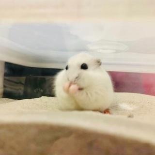 生後半年のパールホワイト♀
