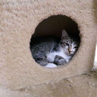 野良の母猫が連れてきた子猫 生後2ヶ月~3ヶ月(届け出ず済、確認...