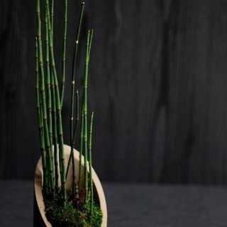 現代インテリアにあうモダン盆栽教室