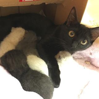 超ビビリ 美猫な黒猫 里親さん募集