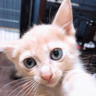 1ヶ月から2ヶ月子猫ちゃん
