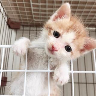 子猫三兄弟 1カ月ほど