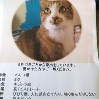 中津市 迷子猫 探しています。