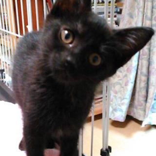 甘えん坊のクロネコ♀3ヶ月