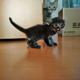 3週間の子猫5匹の里親募集してます!