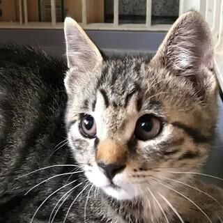 仔猫キジ2ヶ月ぐらい