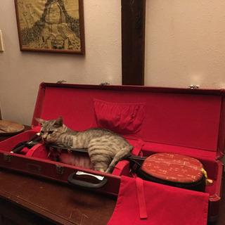 子猫のチャーミーちゃん - 宮古島市