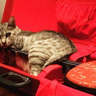 子猫のチャーミーちゃんの画像