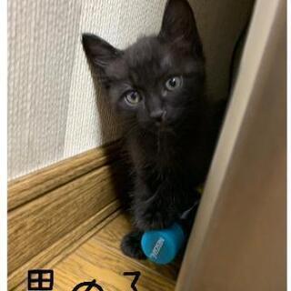 (再)黒子猫ちゃんの里親様募集です。