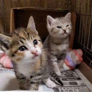 子猫女の子二匹の里親募集中です