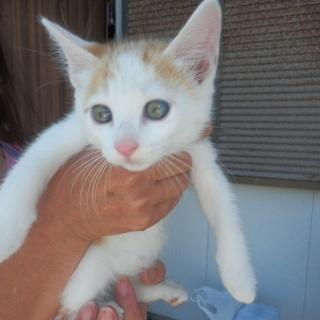 野良猫の赤ちゃん4匹生まれました!かわいいです。後、一匹になりました。