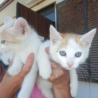 野良猫の赤ちゃん4匹生まれました!かわいいです。後、一匹になりました。 - 神栖市