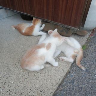 野良猫の赤ちゃん4匹生まれました!かわいいです。後、一匹になりました。 - 猫