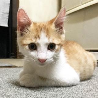 里親さん募集です!子猫3匹います。