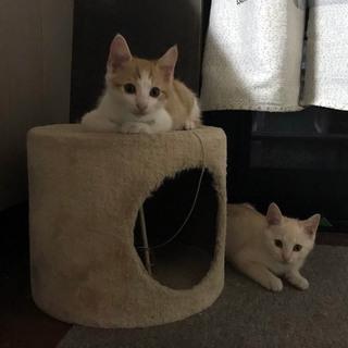 里親さん募集です!子猫3匹います。 − 埼玉県