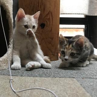 里親さん募集です!子猫3匹います。 - 里親募集