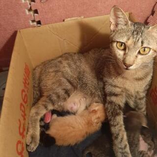 子猫と母猫の里親募集。 - 里親募集